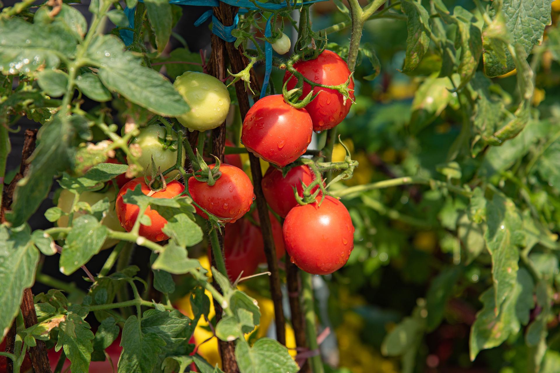 Fructele si legumele din piete, aratoase, dar otravitoare